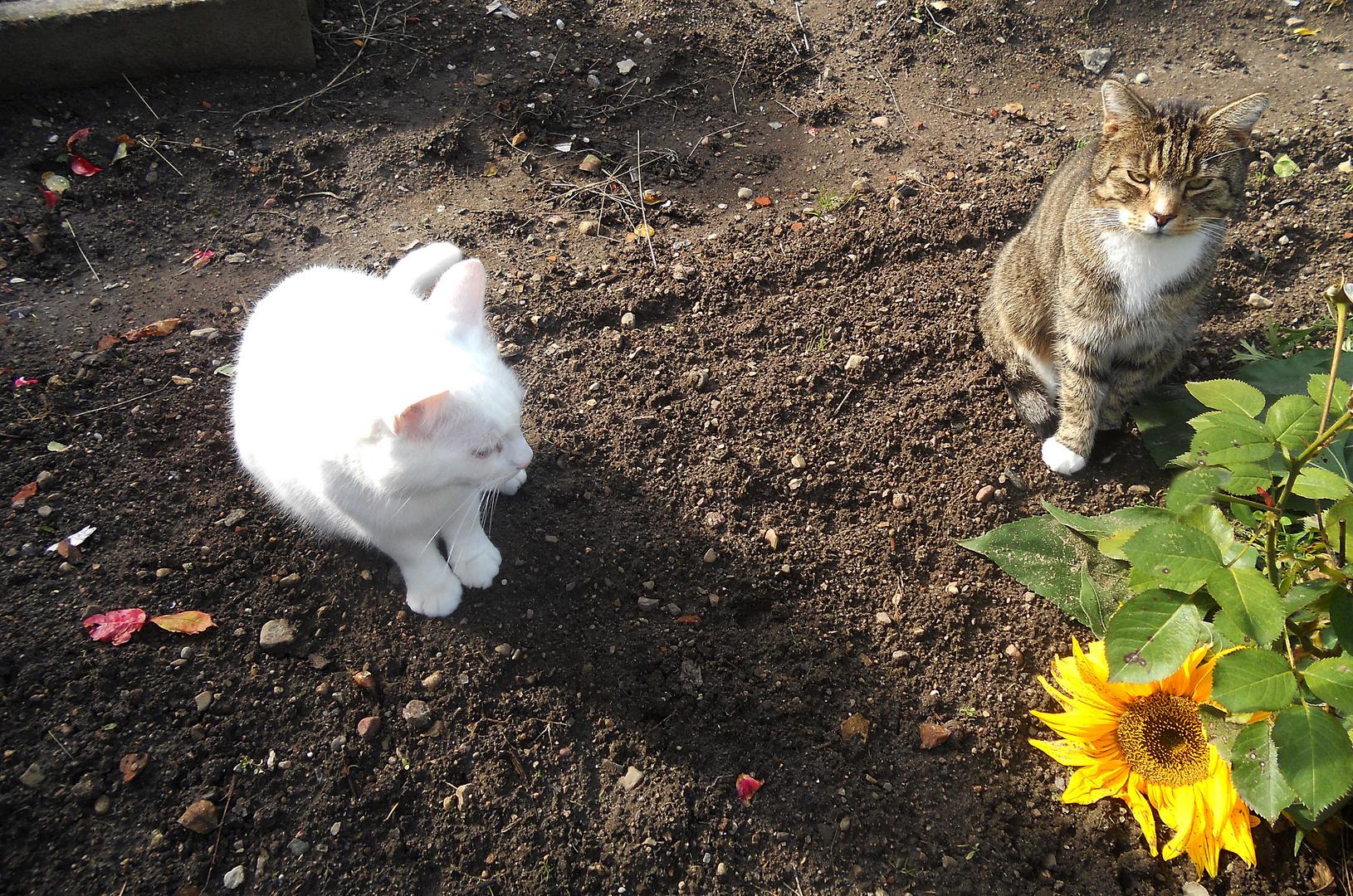 Spike und Felix im Gespräch vertieft