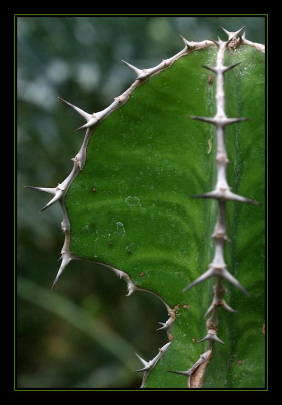 Spiky