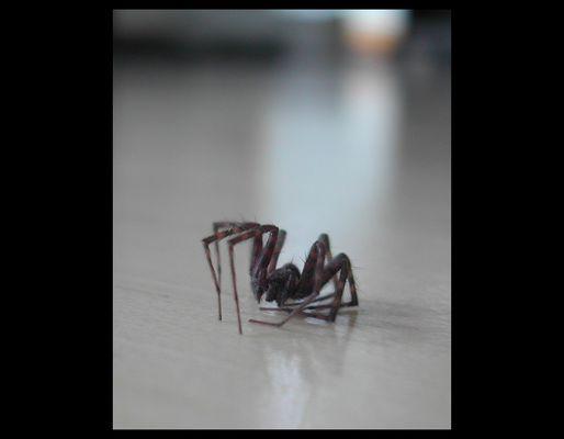 Spinne am Boden