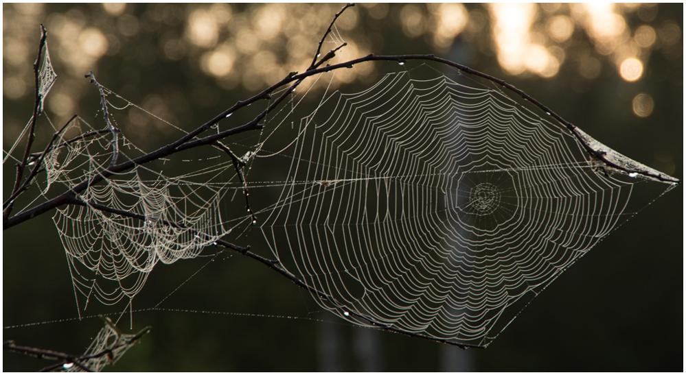 Spinne am Morgen bringt Kummer und Sorgen ;-(( II