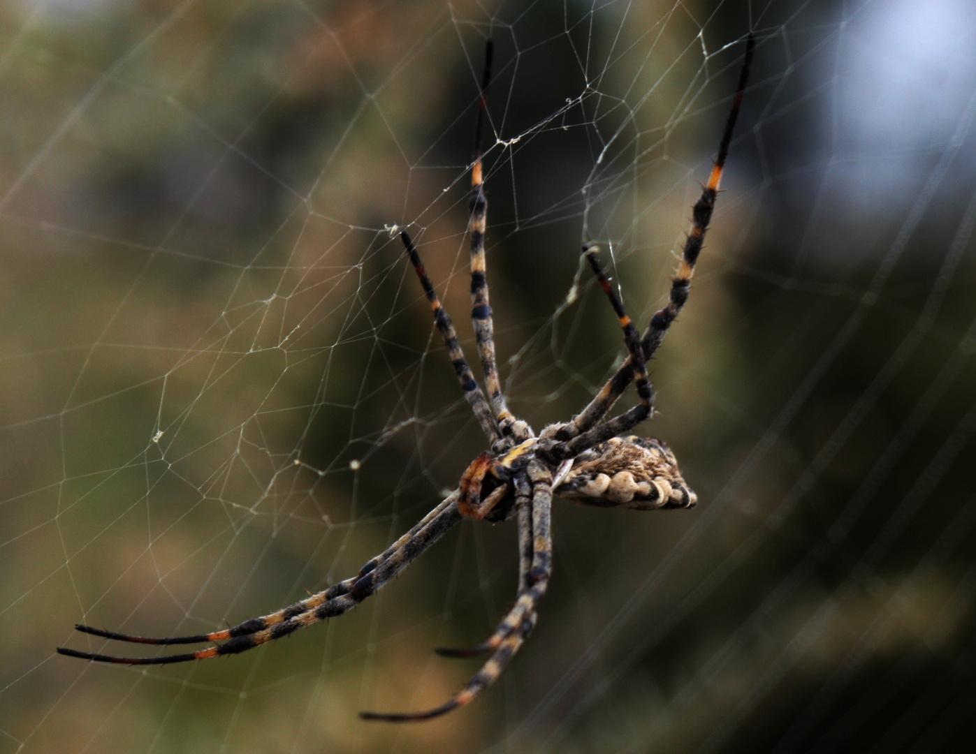 Spinne am Morgen vertreibt Kummer und Sorgen