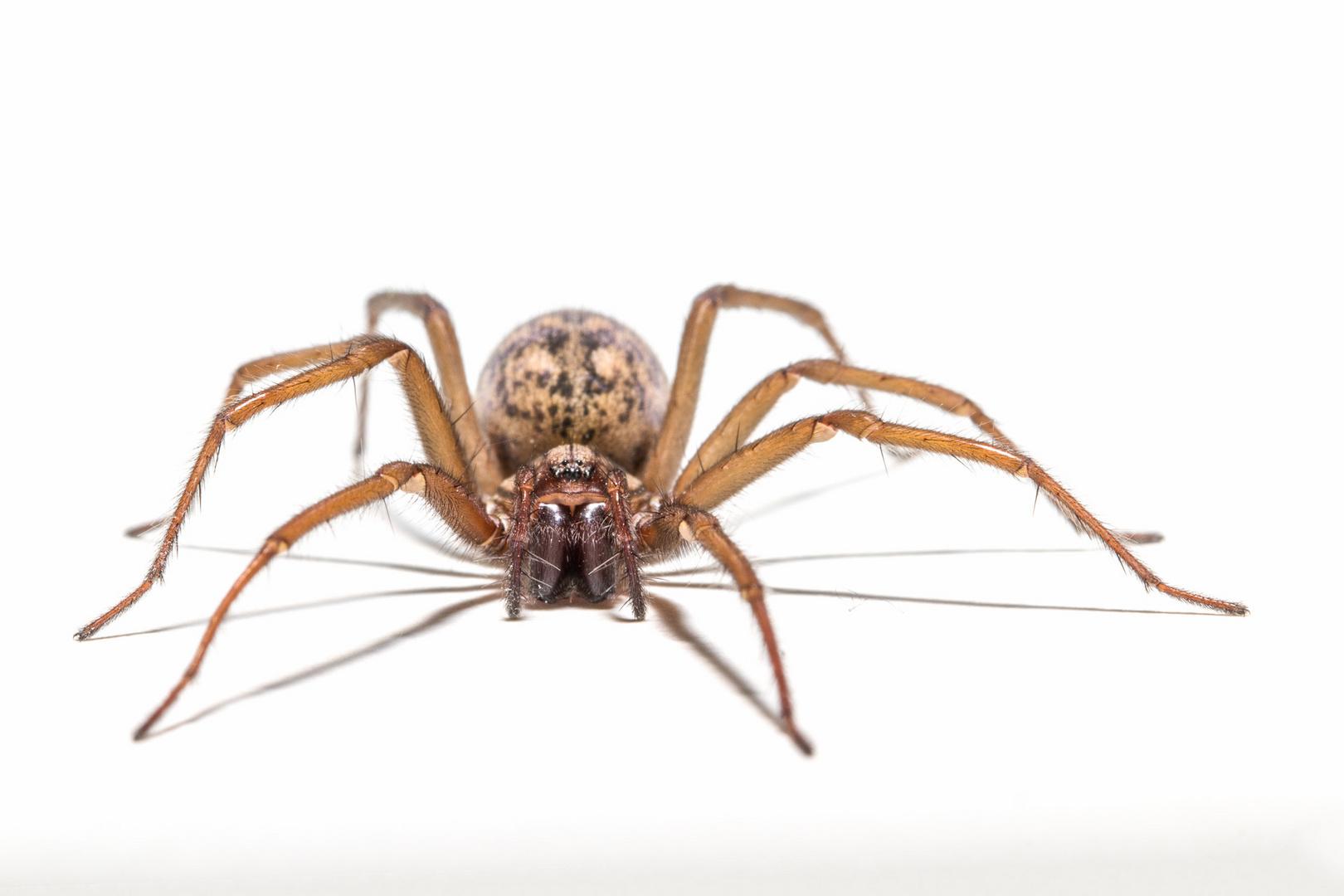 Spinne auf der Hohlkehle