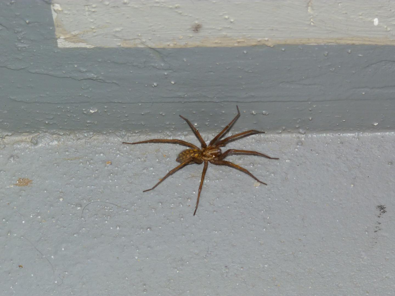Spinne auf einer Treppe