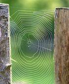 Spinne beim Morgenspaziergang