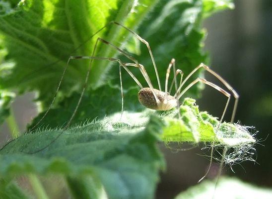 Spinne beim Netzbau