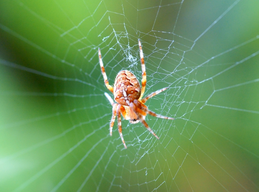 Spinne ca. 0,5 cm groß
