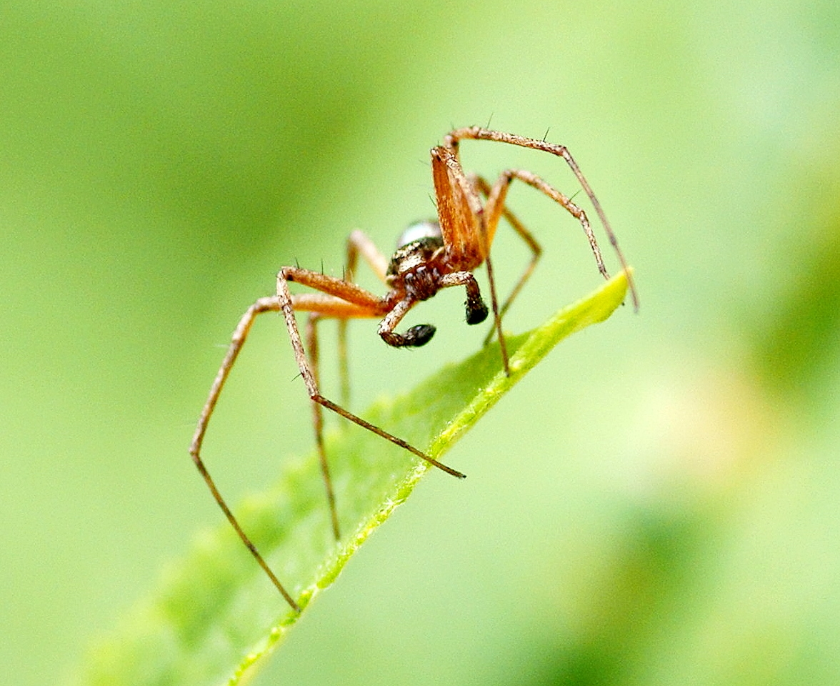 Spinne ca. 1 cm groß