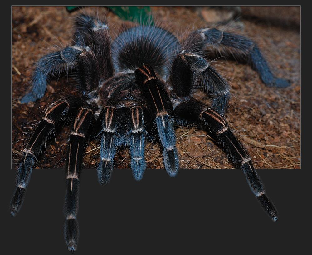 Spinne entlaufen...