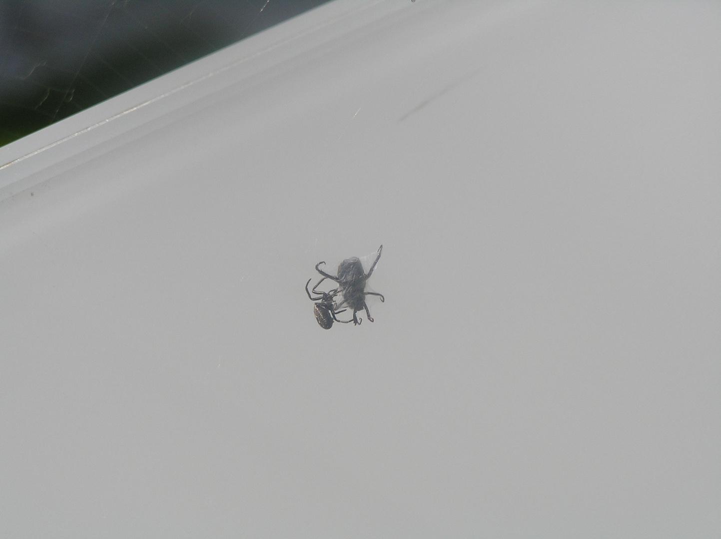 Spinne hatte Glück