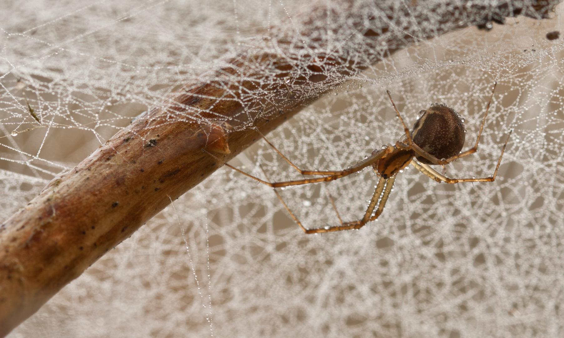 Spinne heute Morgen......