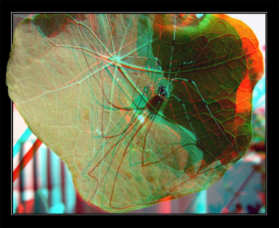 Spinne in 3D