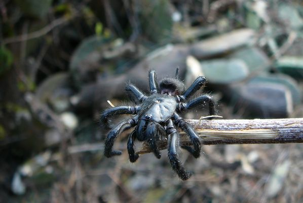 Spinne in Andalusien