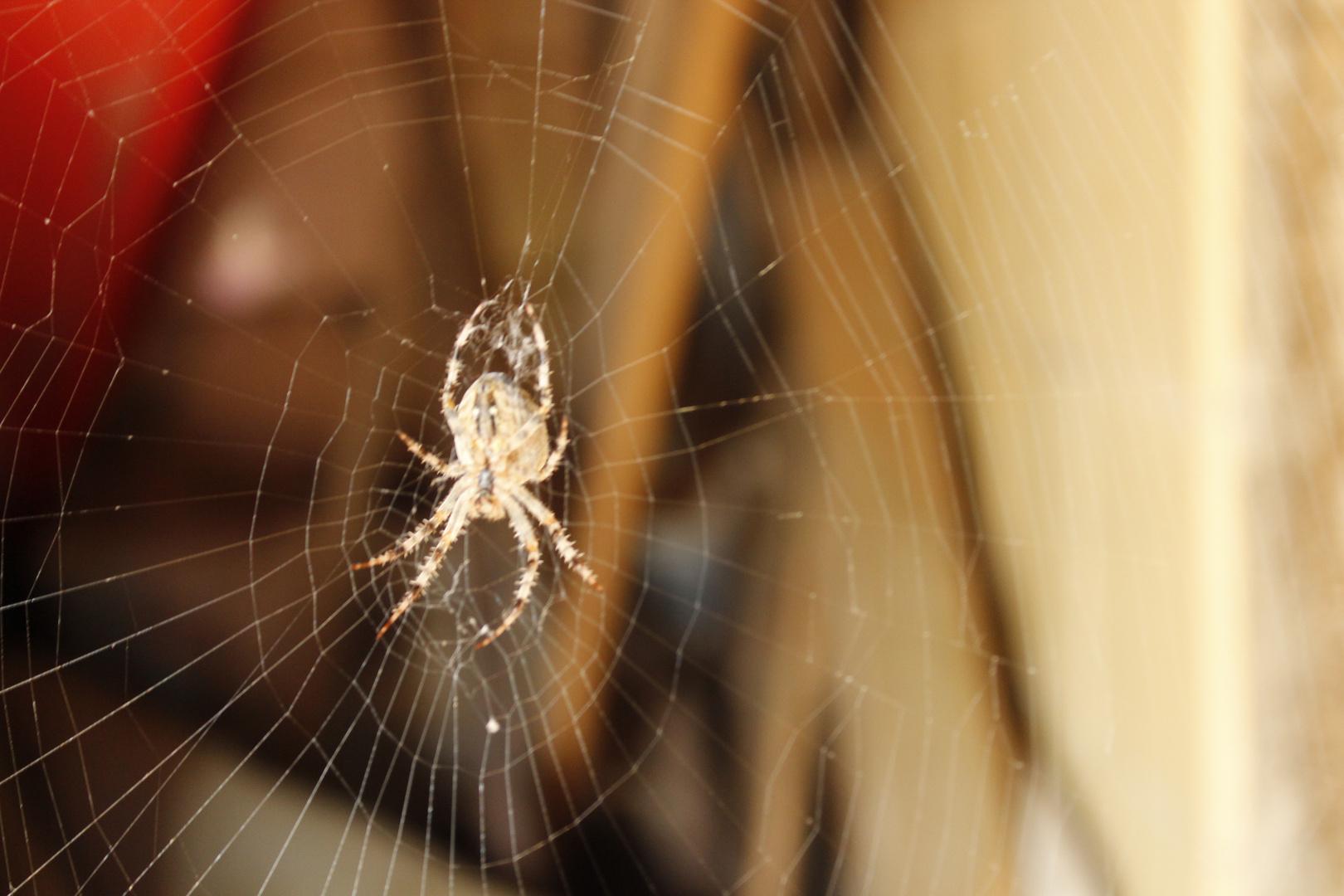Spinne in der Herbstsonne