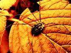 Spinne, Infrarot Style