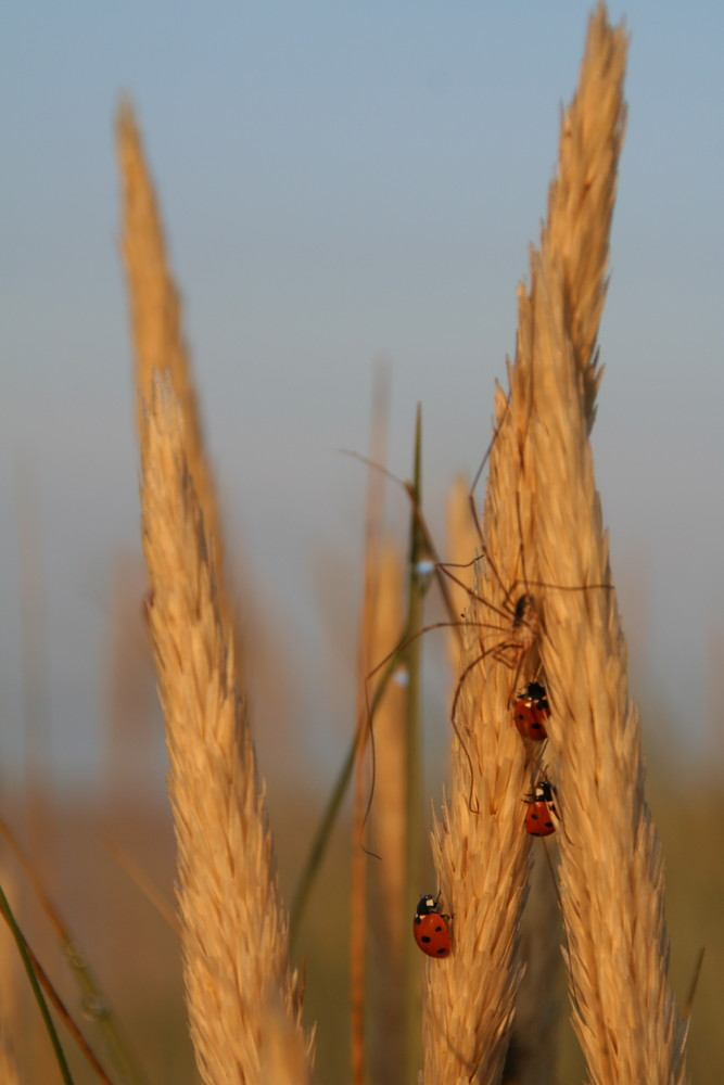 Spinne meets Käfer