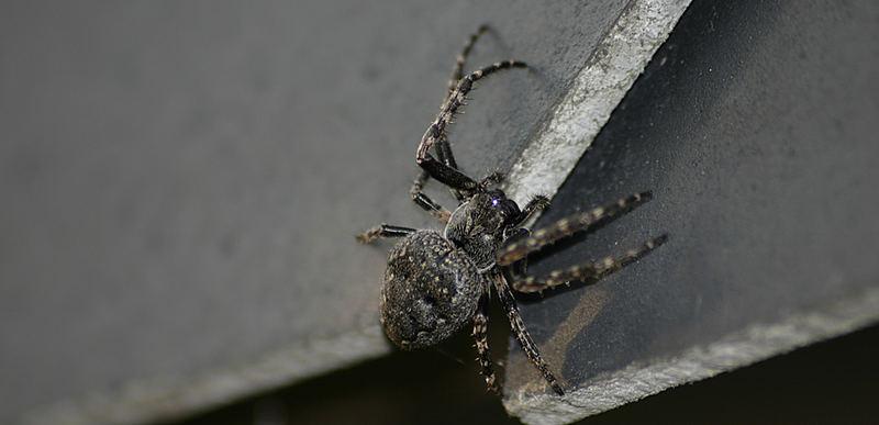 Spinne Nr.2