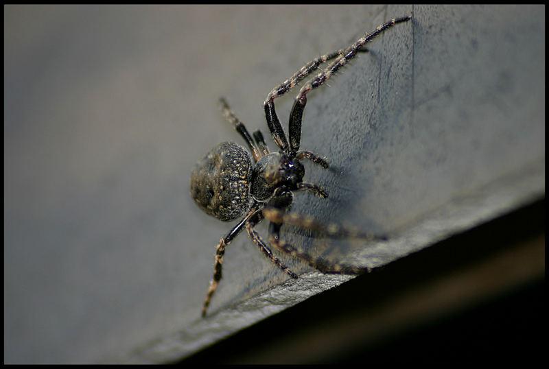 Spinne Nr.3
