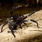Spinne ohne Namen