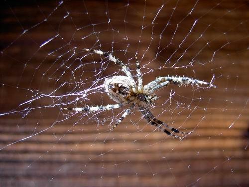 Spinne von ganz nah