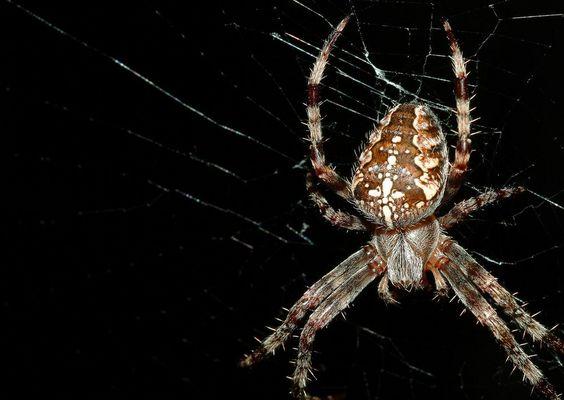 Spinne von oben