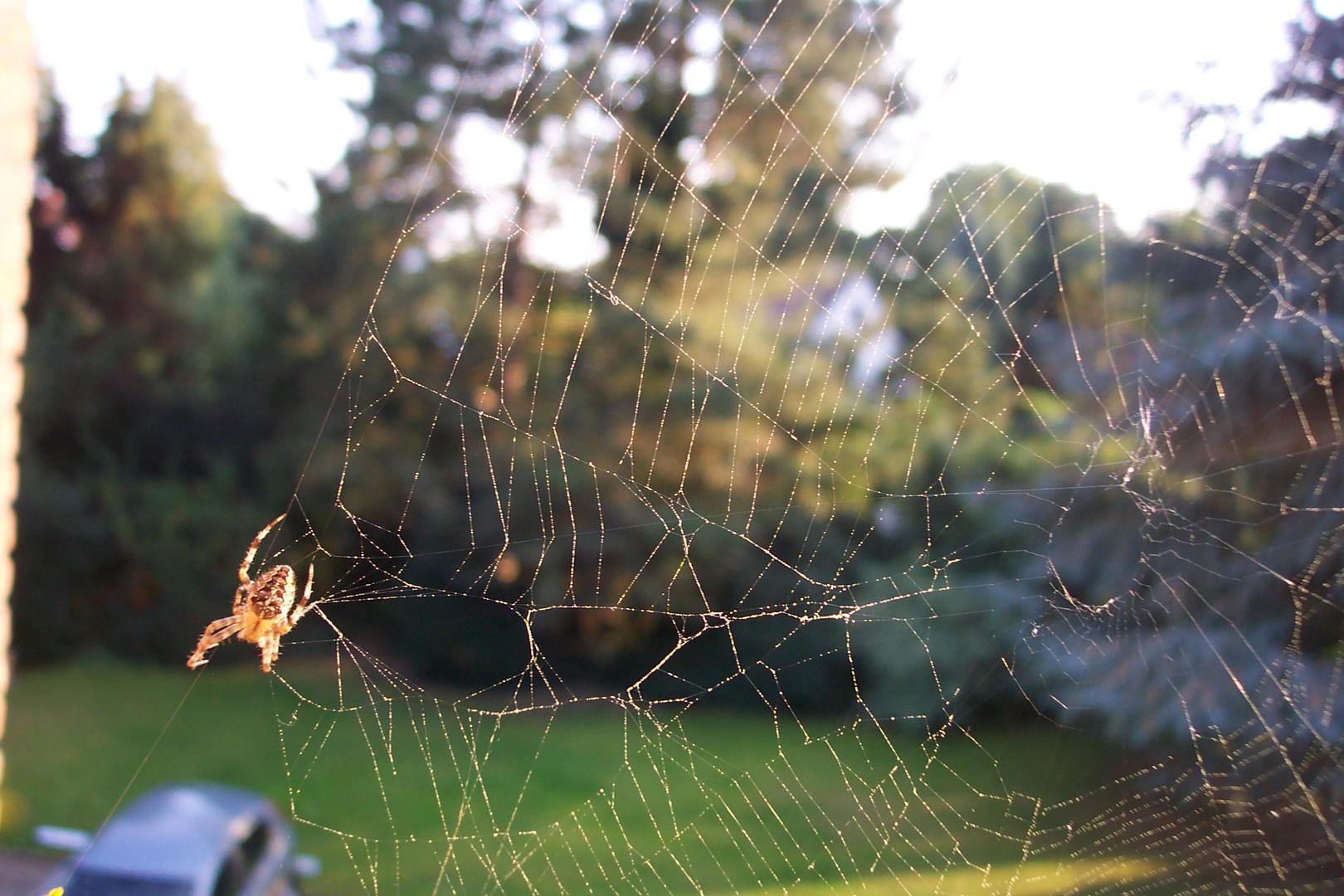 Spinne wohnt auf dem Balkon