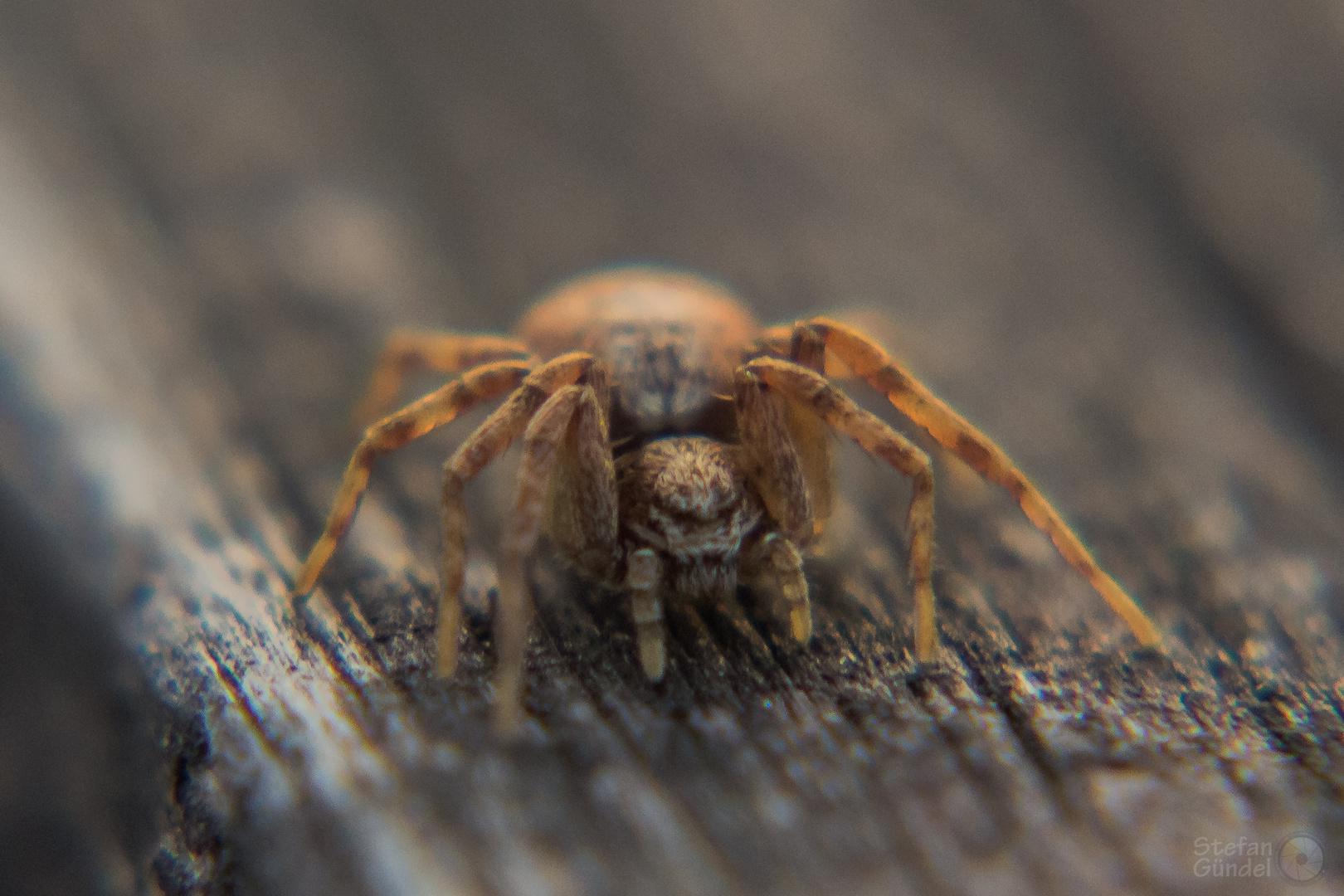 ...Spinne...ganz groß!!...
