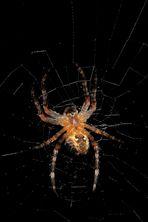 """""""Spinnen am Abend ...... erquickend und labend"""""""