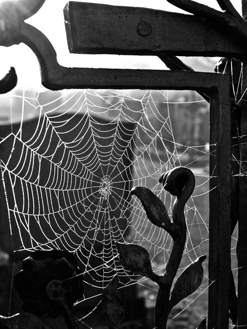 Spinnen auf Geisterfang