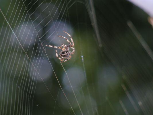 Spinnen, die nicht spinnen, spinnen