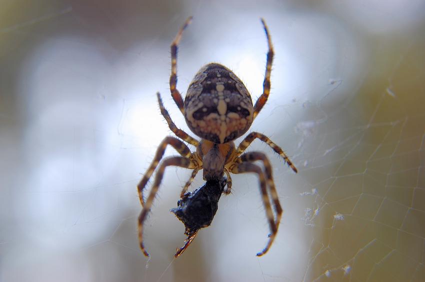 Spinnen Fast Food