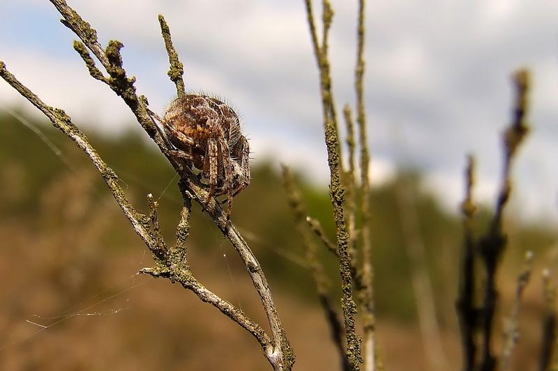 Spinnen find' ich gut. (2)