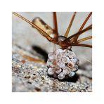 *Spinnen-Nachwuchs* 13092014