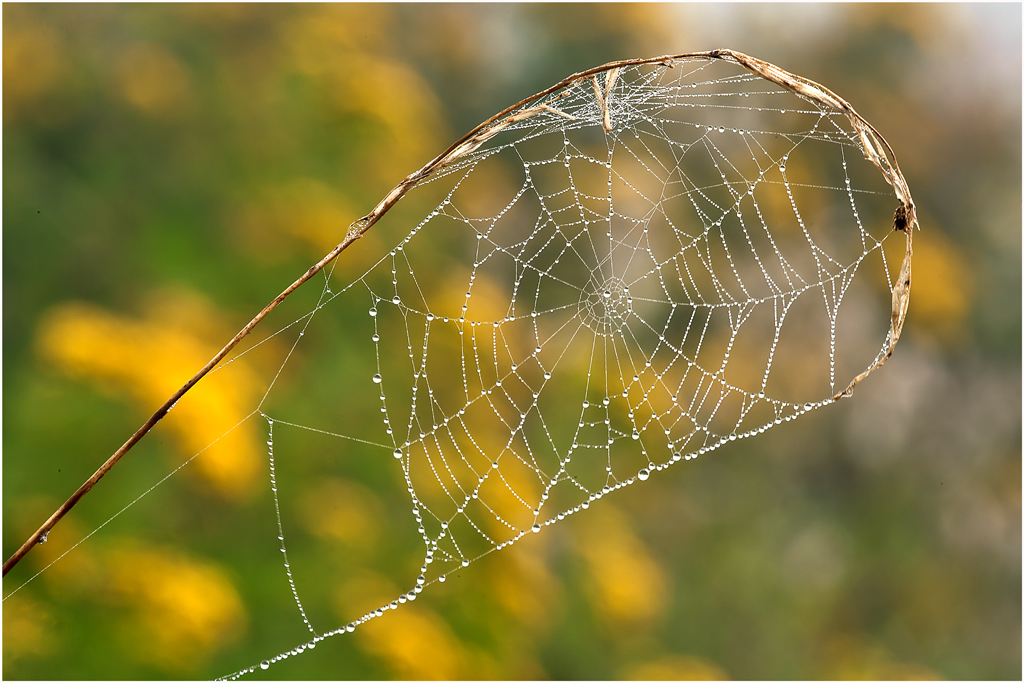 Spinnen Netz
