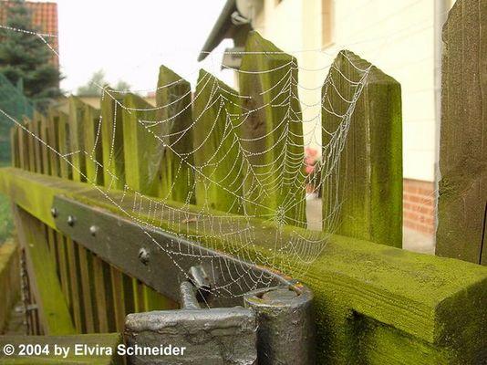 Spinnen - Netz