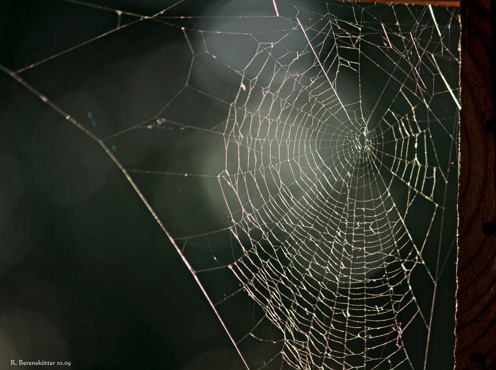 Spinnen-Netz