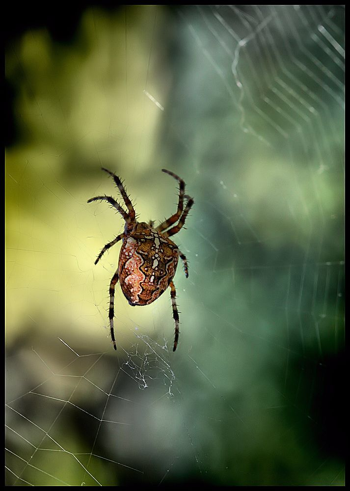 spinnen spinnen...