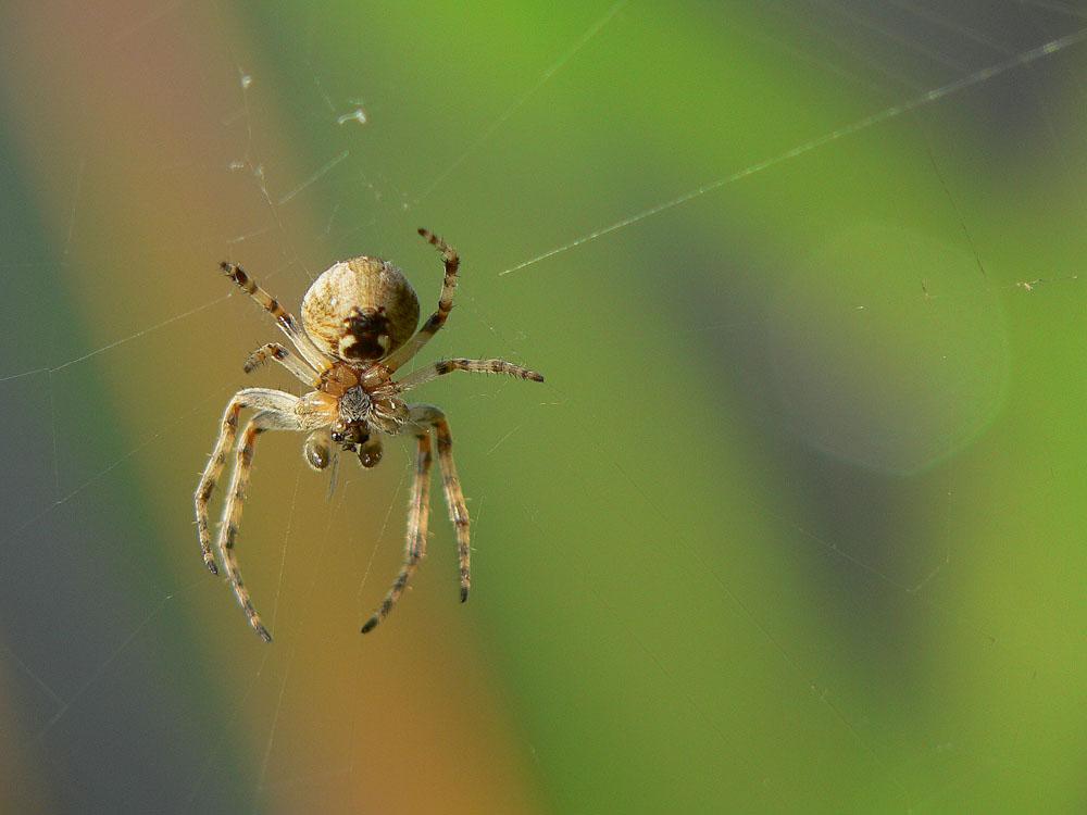 Spinnen Zeit....