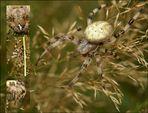 Spinnenalarm auf der Wiese