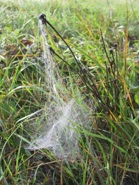 Spinnenarbeit