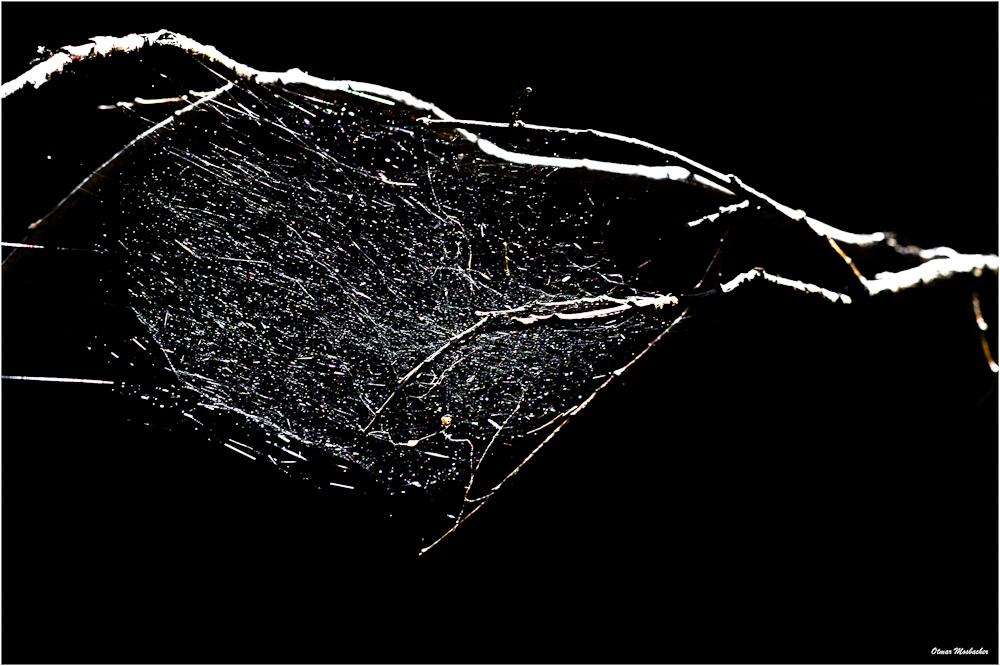 spinnenbehausung