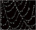 Spinnencollier