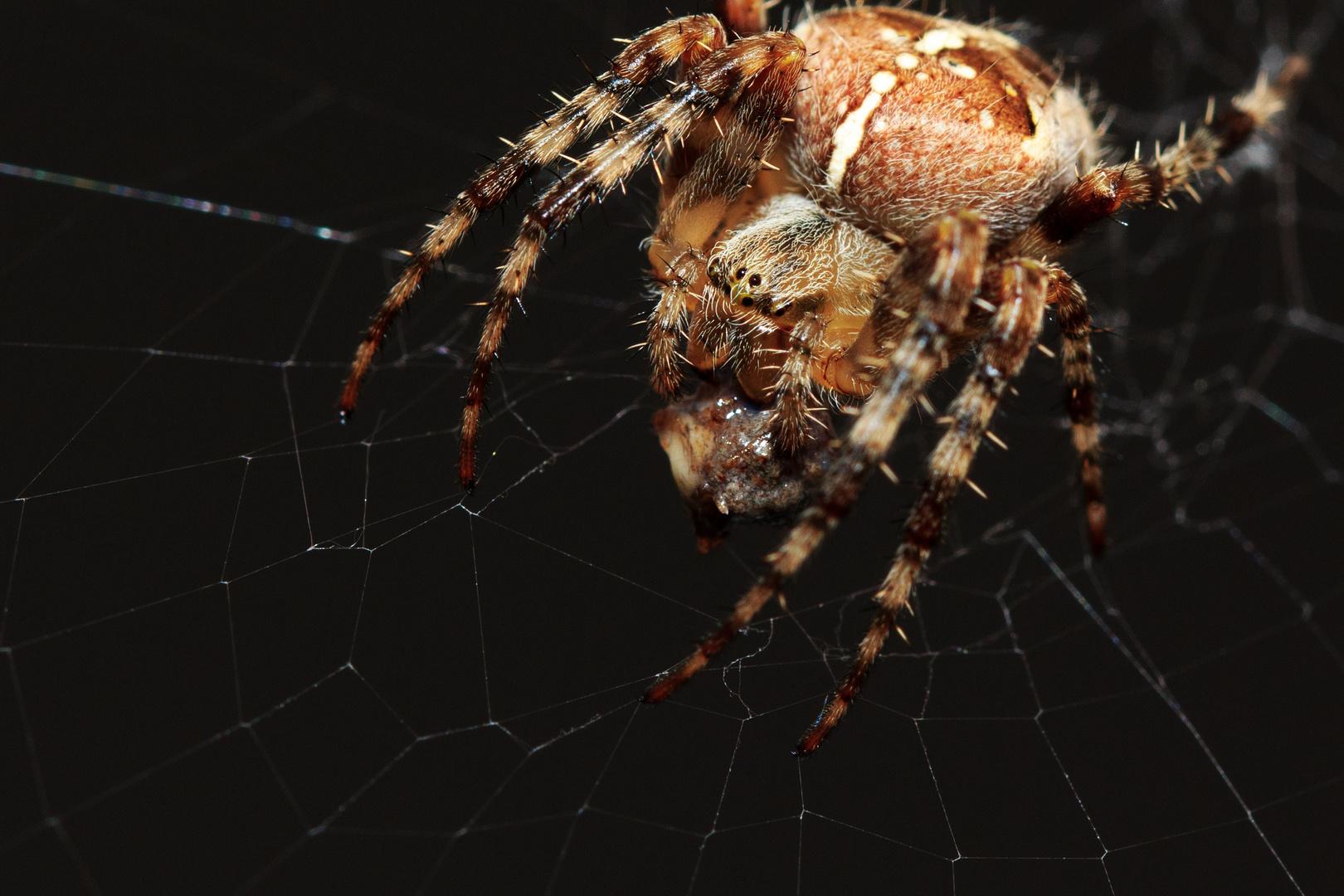 Spinnendinner