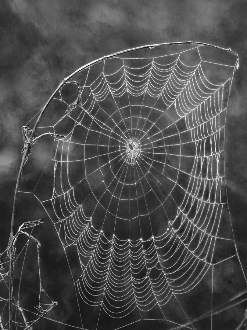 Spinnenentz
