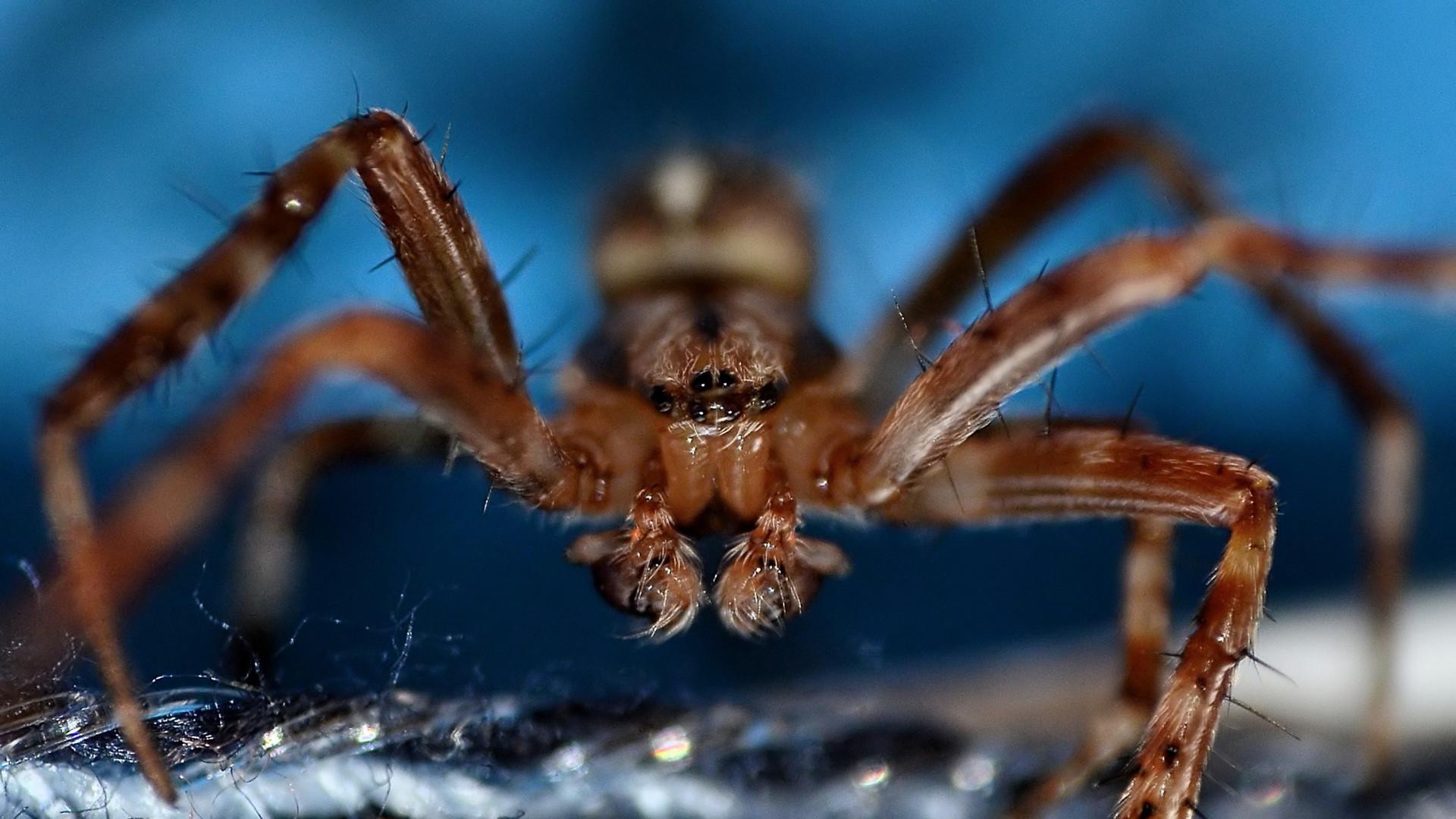 Spinnengesicht