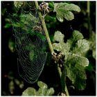 Spinnengewebe
