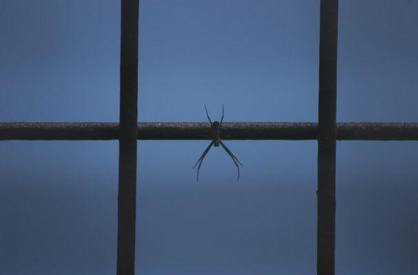 Spinnengitter