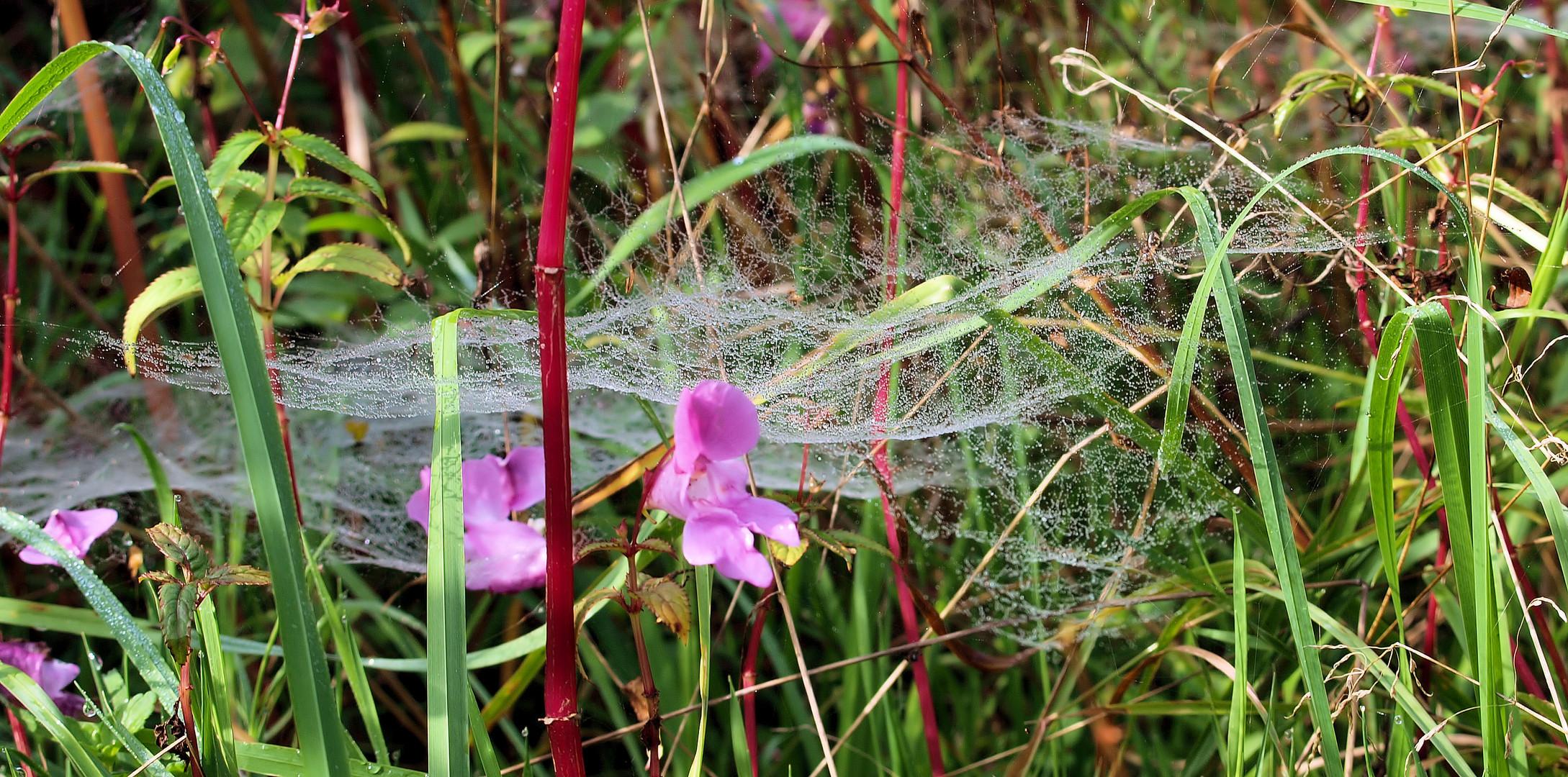 Spinnenkunst