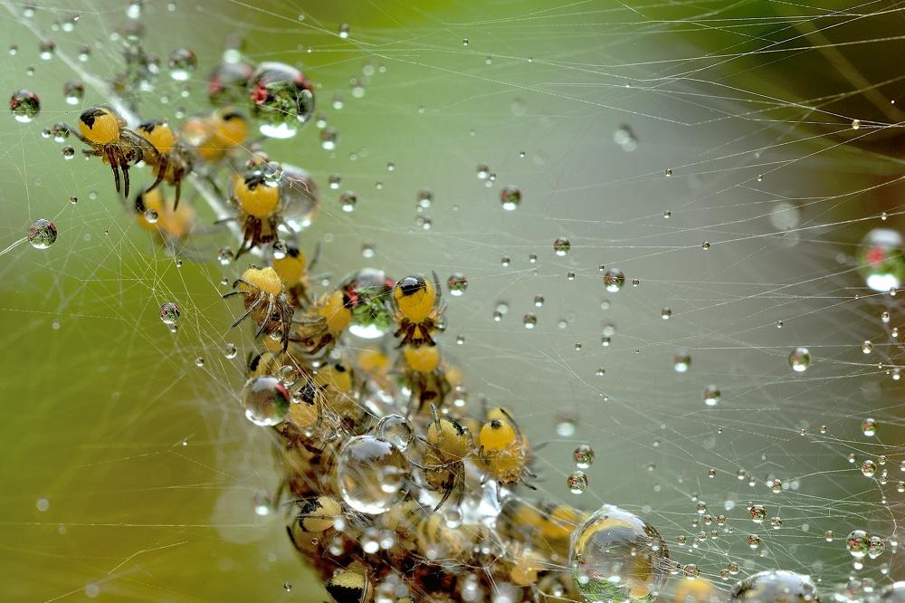 Spinnennest nach dem Regen