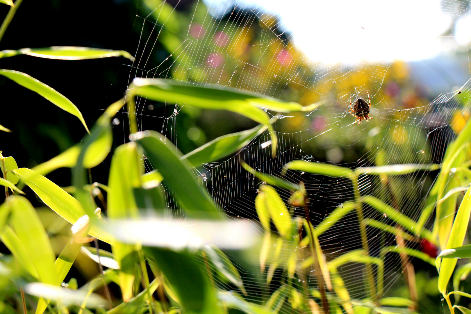 Spinnennetz'