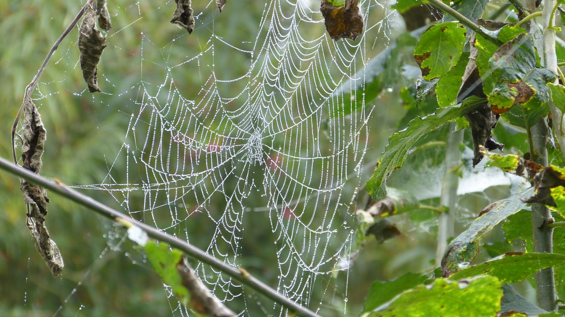 Spinnennetz 2